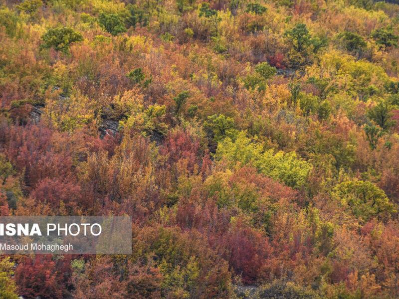 ایران زیباست؛ رنگ آمیزی پاییز در «پرور»